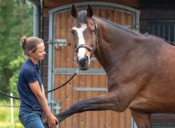 Osteopaat paard Mariél Schrijvers