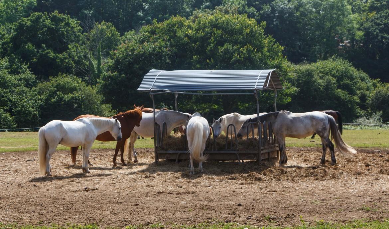 Groep paarden in de wei bij hooiruif