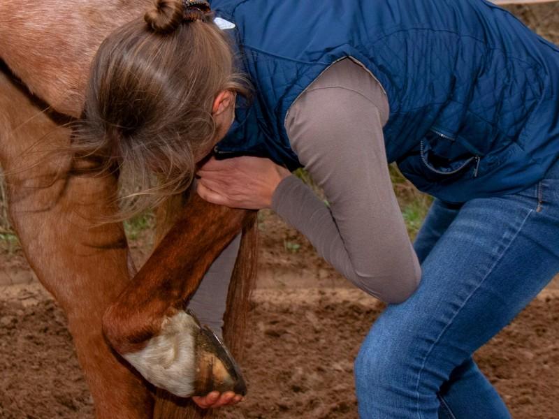 Testen van het tarsal gewricht paard
