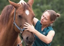 osteopaat paard Mariel Schrijvers