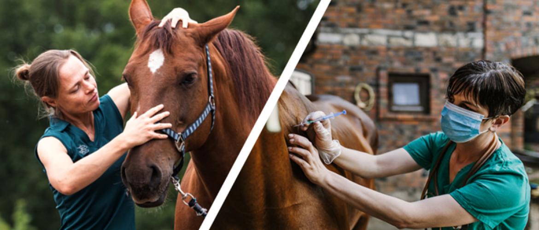 Verschil tussen paardenosteopaat en dierenarts