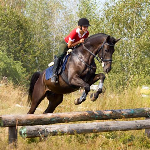 Met je eigen paard leuke dingen doen