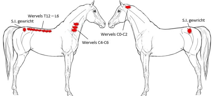tekening van paard met wormen