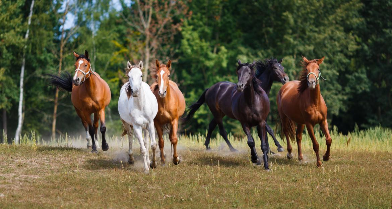 Zes paarden rennend in de wei