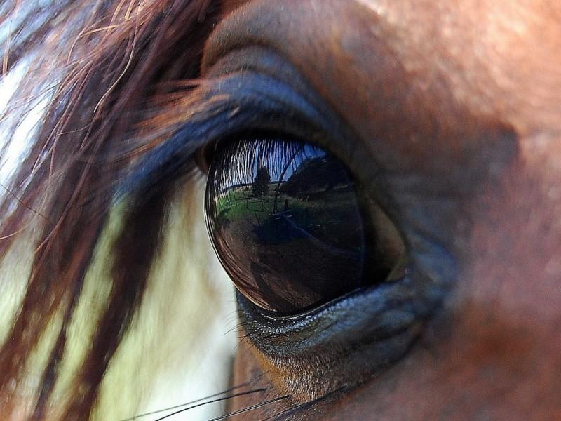 Foto van paardenoog