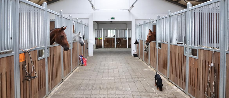 Waar je (minimaal) op moet letten als je een pensionstalling voor je paard zoekt
