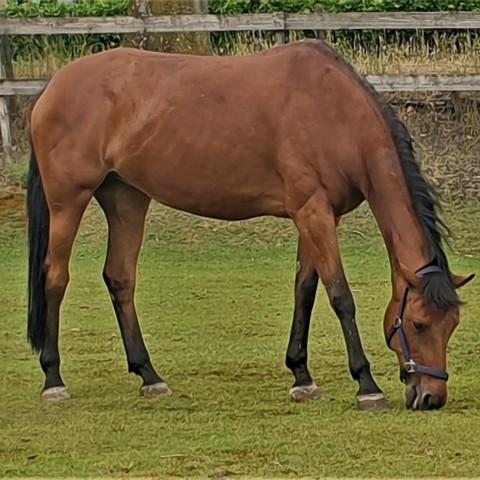 Tevreden klant na osteopathie behandeling van haar paard
