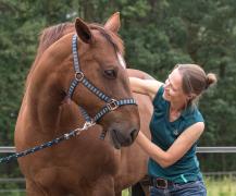 Osteopaat paard met bruine merrie