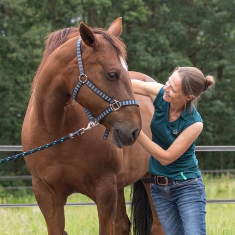 Mariël aan het werk als paardenosteopaat