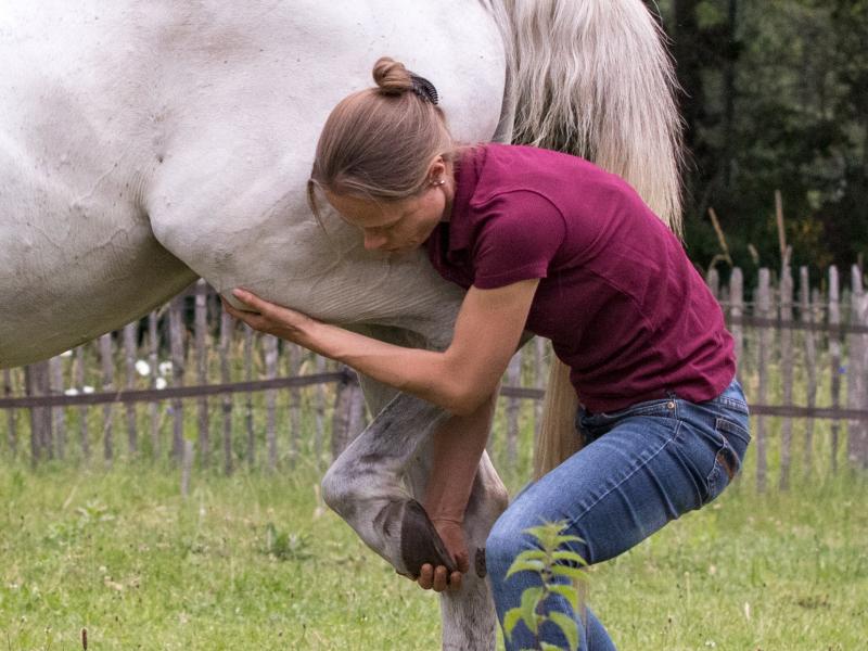 Osteopaat voor paarden Mariël Schrijvers test de knie van een paard