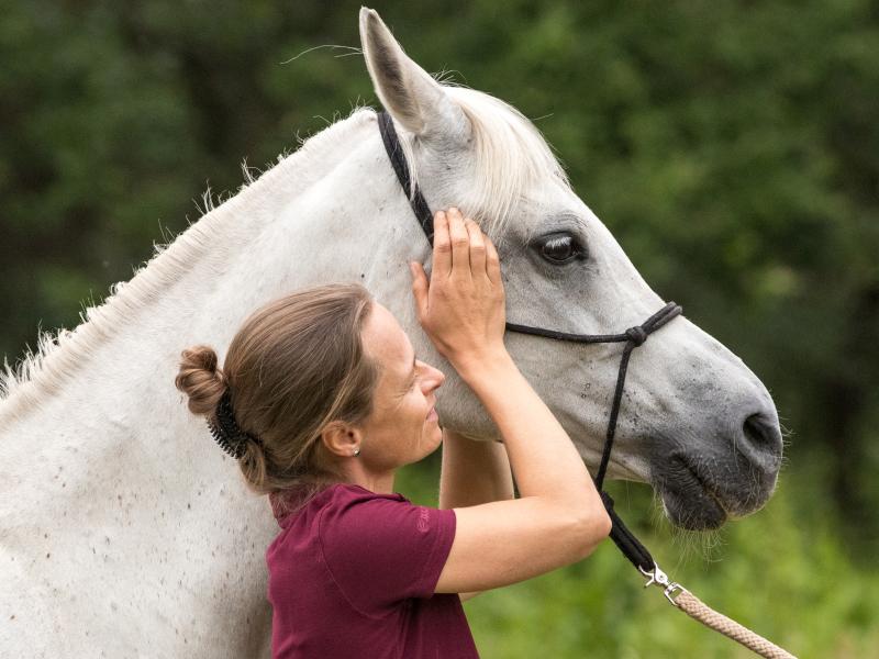 Equine osteopaat Mariël behandelt een osteopatische disorder op het kaakgewricht