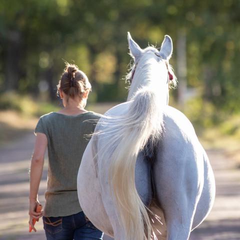 Paard wordt gestapt aan de hand