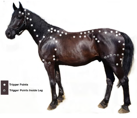 triggerpoints bij paarden