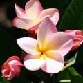 aloha-betekenis