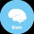 Brein management -groeiwijzer fase 1