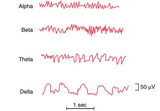 4 soorten hersengolven tijdens slaap