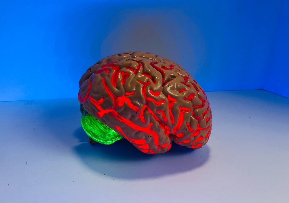 Gluconeogenese brein afhankelijk
