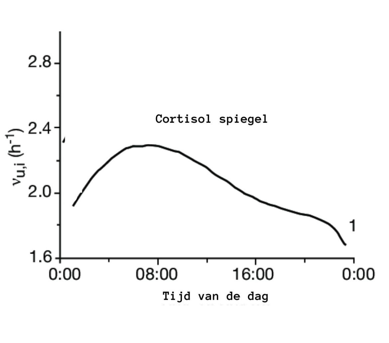cortisol spiegel circadiaans ritme