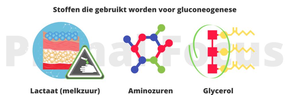 Gluconeogenese gebruikte stoffen