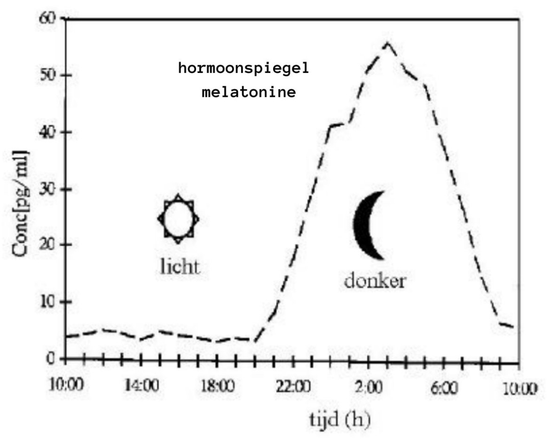 melatonine hormoonspiegel circadiaans ritme