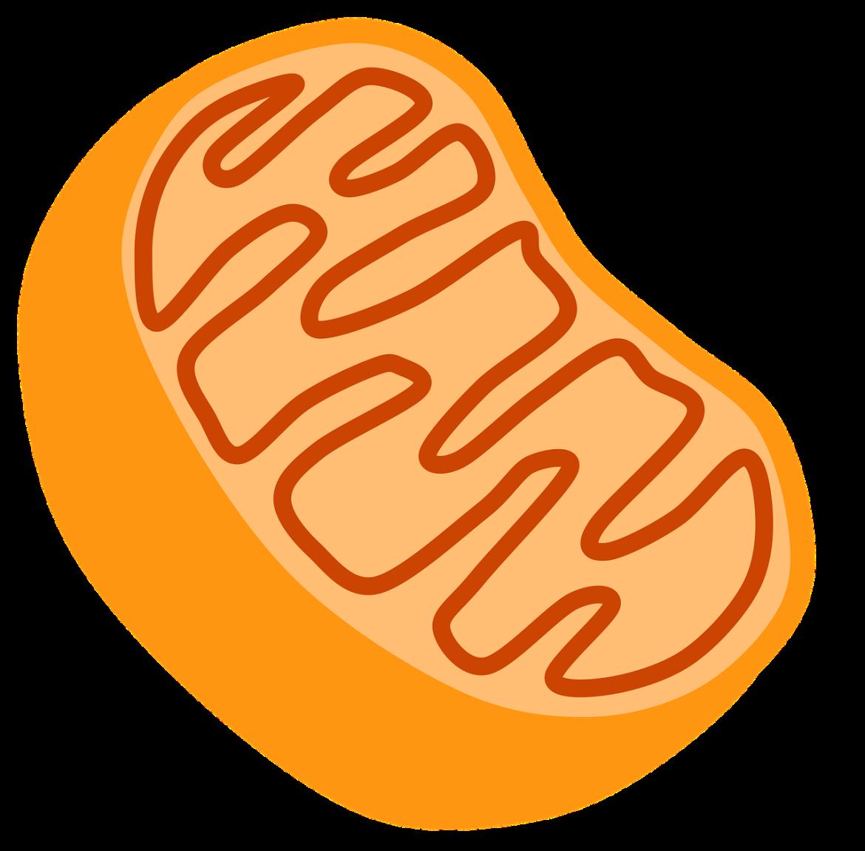 glutathion productie mitochondria