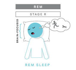 Slaapcyclus REM-fase