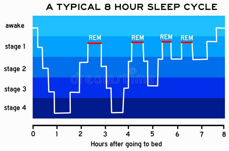 slaap cyclus rem slaap