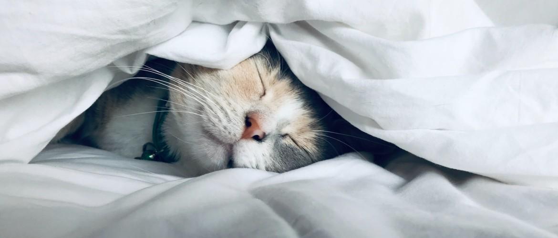 Slaap jij voldoende? Handige weetjes en 9 tips voor een goede nachtrust