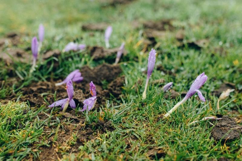 bloemen, vorst, lente