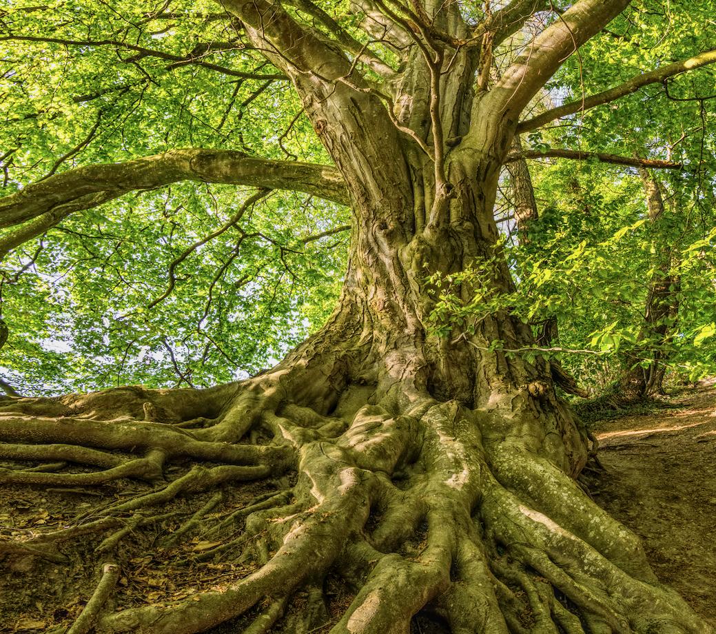 boom. wortels, groei, leven