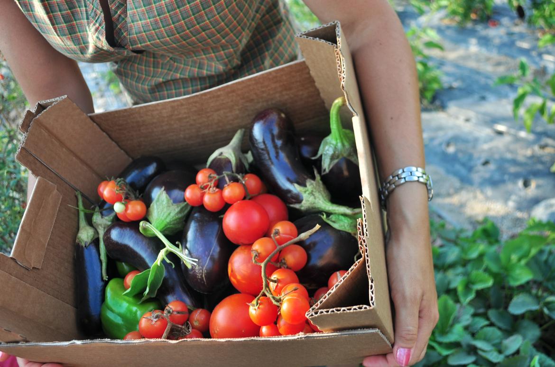 eten, voeding, groenten, maaltijd, biologisch, tomaten, aubergine, moestuin