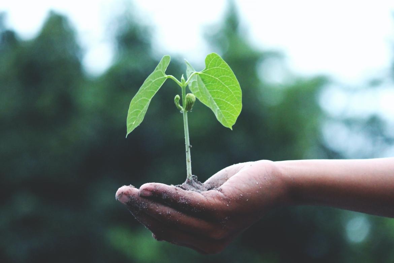 groei, potentie, plant, leven