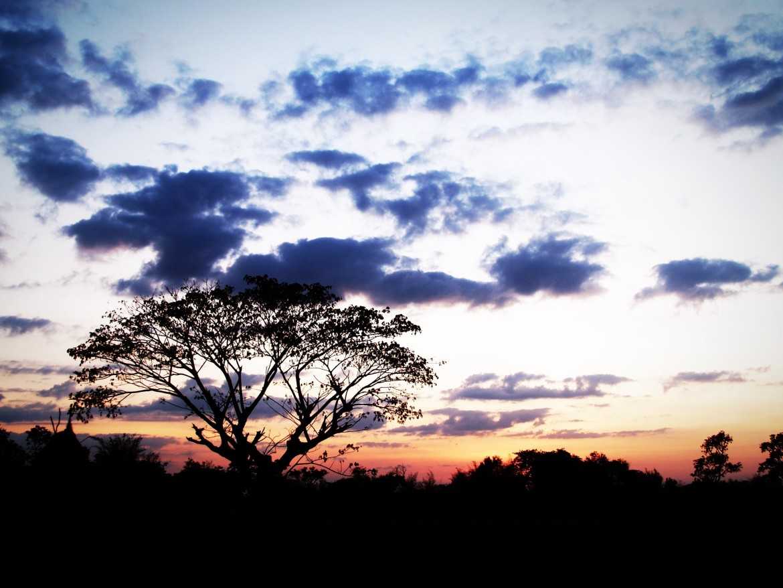 wereld, boom, zonsondergang, stilte, rust, eenzaam