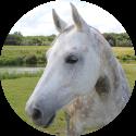 loopbaanbegeleiding paardencoaching plan
