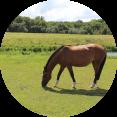 loopbaanbegeleiding paardencoaching balans