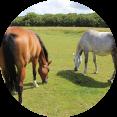 paardencoaching puurlijk
