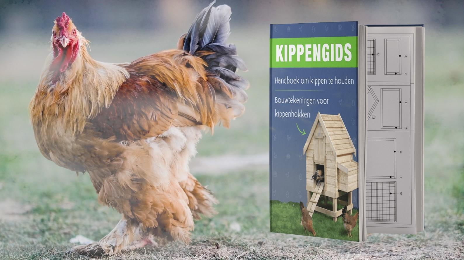 De Kippengids review