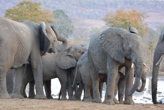 olifanten kruger NP