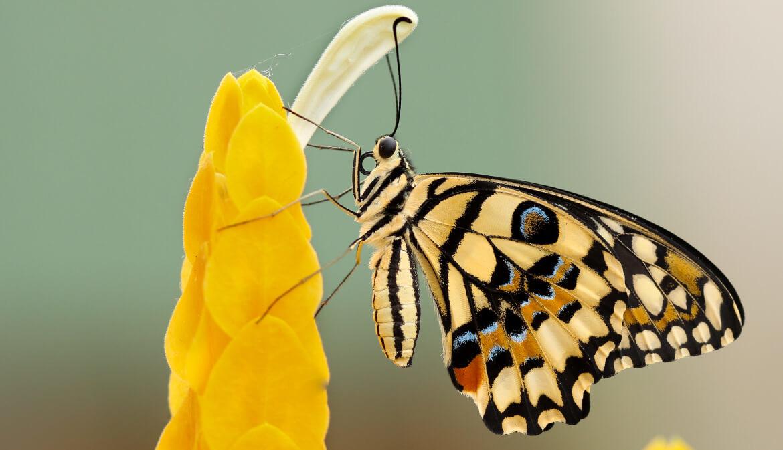 Hoe kan butterfly effect helpen bij stress en burnout?