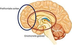 Neurofeedback verbeterd samenwerking emotionele brein en frontale cortex