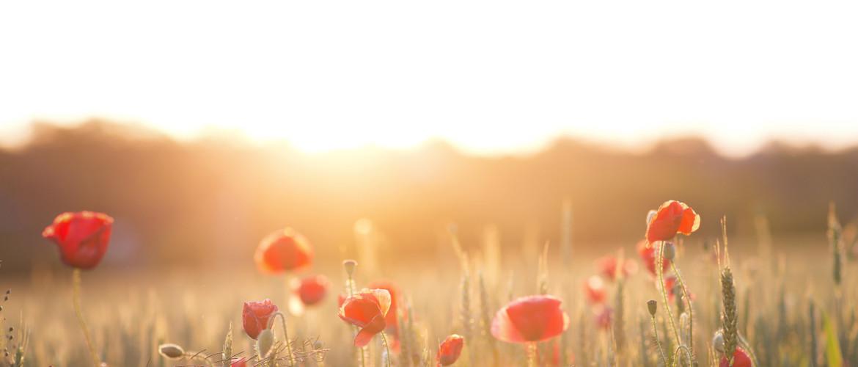 Meer rust en focus? Start met dit ochtendritueel!