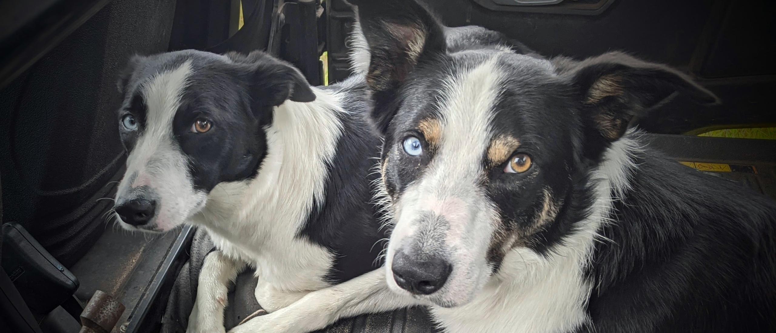 Broer en zus aan het werk voor Crosshill Natuurbegrazing