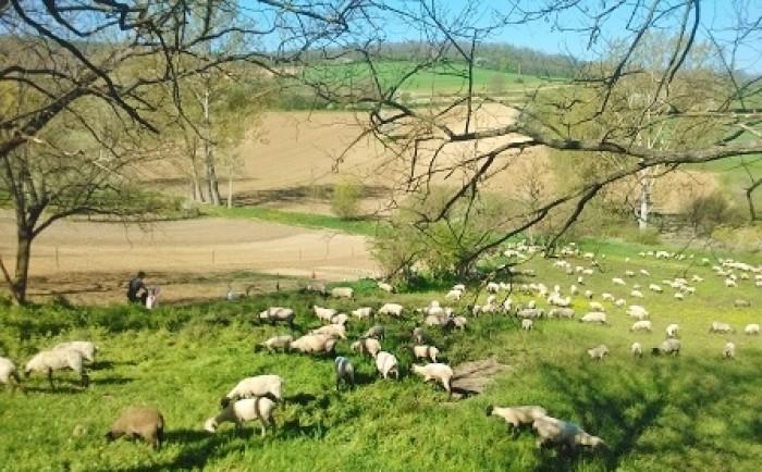 Genieten van de ongerepte natuur tijdens je schildervakantie in Hongarije