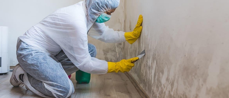 Op welke manier kun je schimmel op de muur bestrijden?