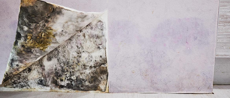 Hoe kun je vochtplekken achter het behang verwijderen?