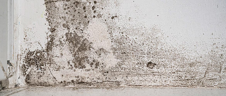 Zwarte schimmel op de muur