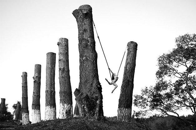Acey Harper trees
