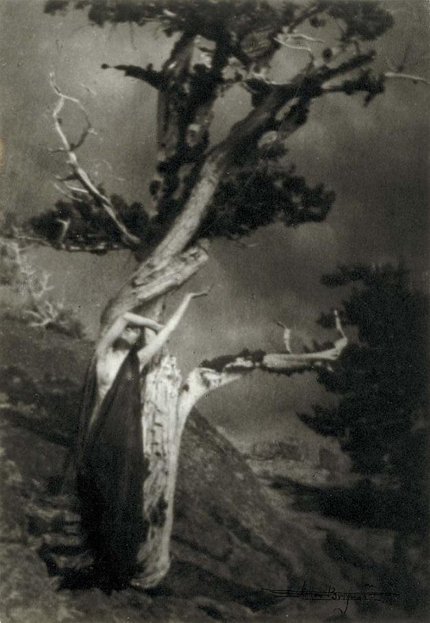 Annie Brigman The Dying Cedar