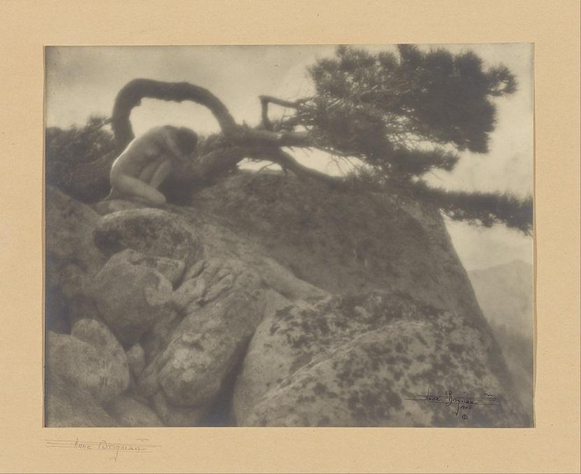 Annie Brigman The Lone Pine