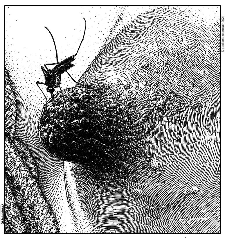 Apollonia Saintclair nipple mosquito